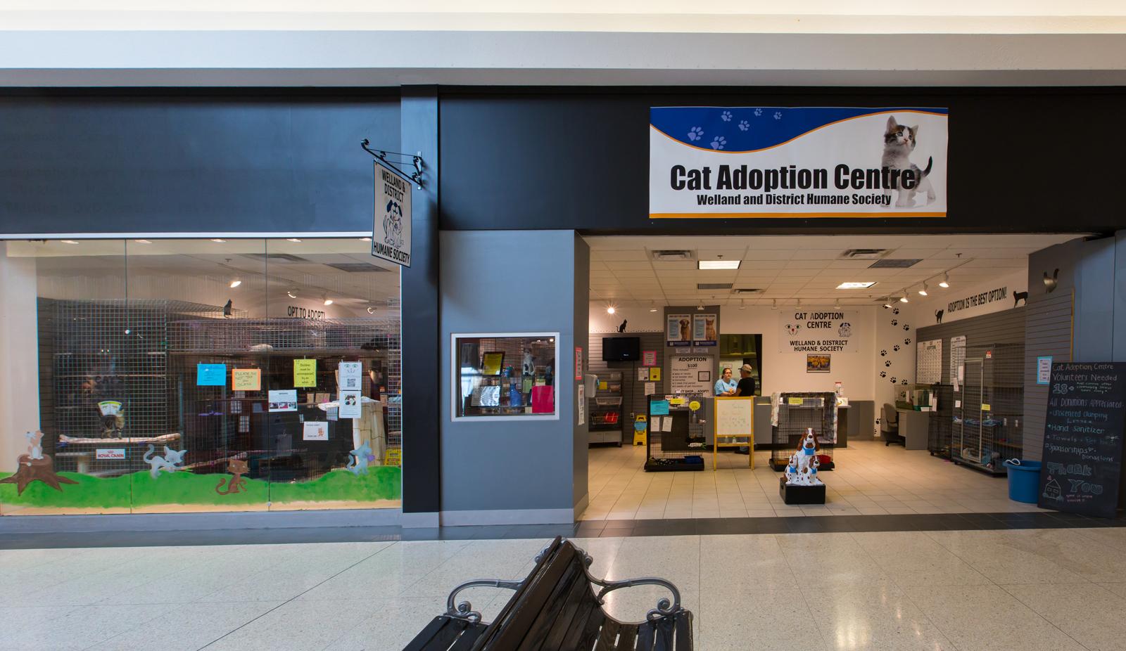 Cat Adoption Centre Welland SPCA